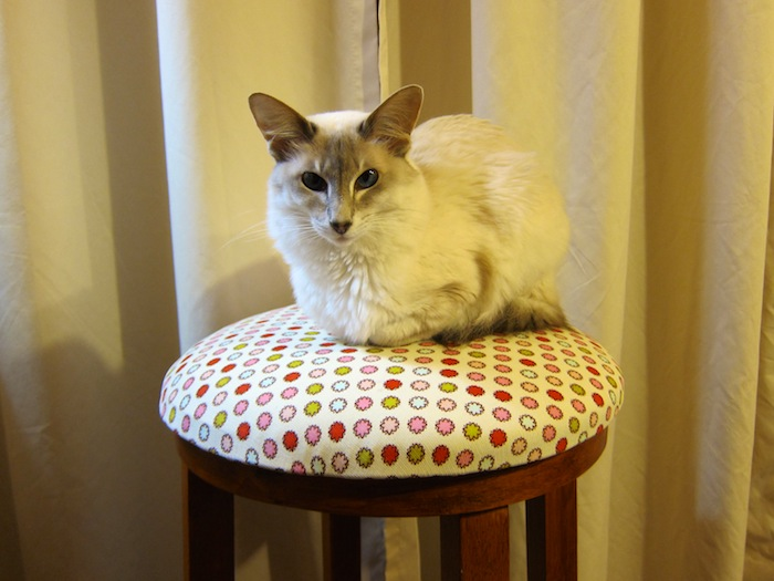 """<a href=""""/2014/05/22/recovered-stool/"""">Recovered Stool</a>"""