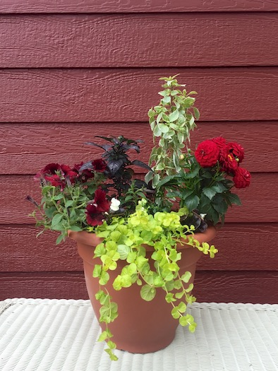 """<a href=""""/2015/05/19/potted-flowers/"""">Potted Flowers</a>"""