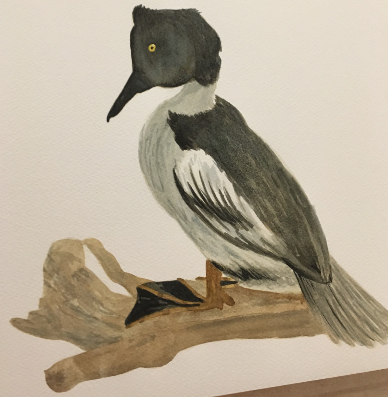 """<a href=""""/2017/11/28/bird-painting-and-drawing-workshop/"""">Bird Drawing and Painting Workshop</a>"""