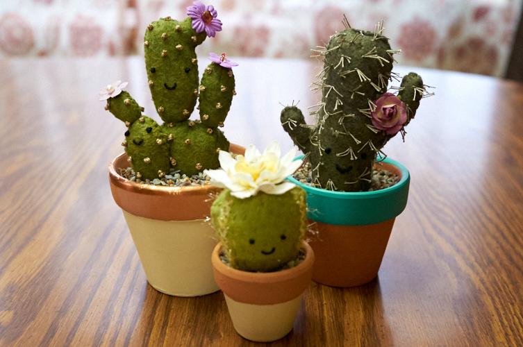 "<a href=""/2019/11/29/even-more-cacti/"">Even More Cacti</a>"
