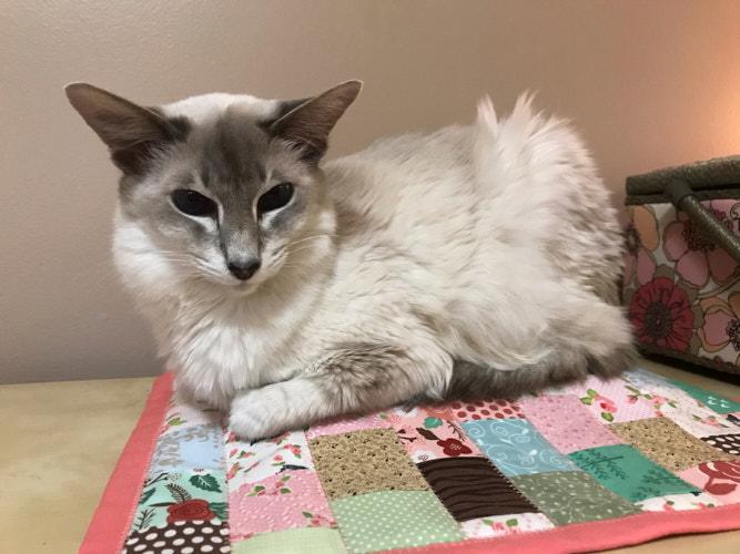 "<a href=""/2020/01/04/cat-mat-mini-quilt/"">Mini Quilt for my cat</a>"