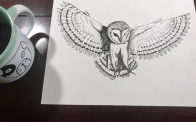 Sketch: Barn Owl