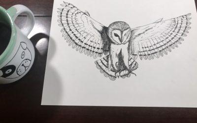 Sketch: Barn Owl